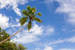 Coconut palm and blue sky