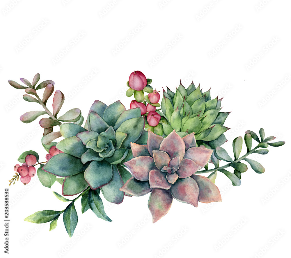 Fototapeta Watercolor succulent bouquet with red berries. Hand painted green and violet flowers, branch and hypericum isolated on white background. Floral illustration for design, fabric, print or background.