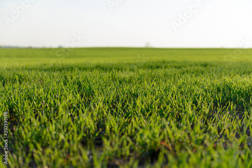 Foto op Canvas Platteland Green grass field