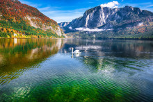 Sunny Morning And Swan On The Lake Altausseer See Alps Austria Europe