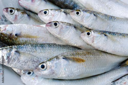 Foto op Plexiglas Vis Fresh Mullet Fish for Cooking.