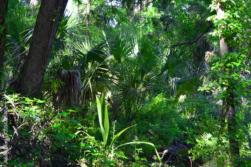 Lush Jungle Tropical Palms Green Background Flora and Fauna