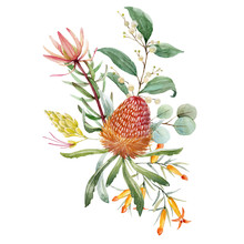 Watercolor Australian Banksia ...