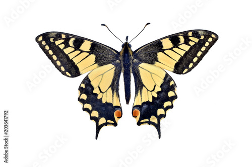 Fotomural Old world swallowtail butterfly (Papilio Machaon), isolated on white