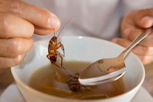 Cockroach In Hand Take Up From Soup,Contaminate Bacteria Food Risk Of Food Poinsoning
