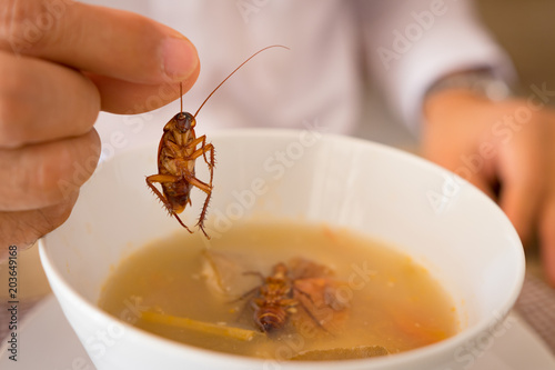 Fototapeta  Cockroach in hand take up from soup,Contaminate bacteria food risk of food poins