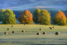HAYBALES And Autumn Colours In...