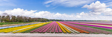 Panorama With Colorful Dutch T...