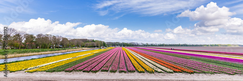 Panorama with colorful Dutch tulips in the field against a blue sky Wallpaper Mural