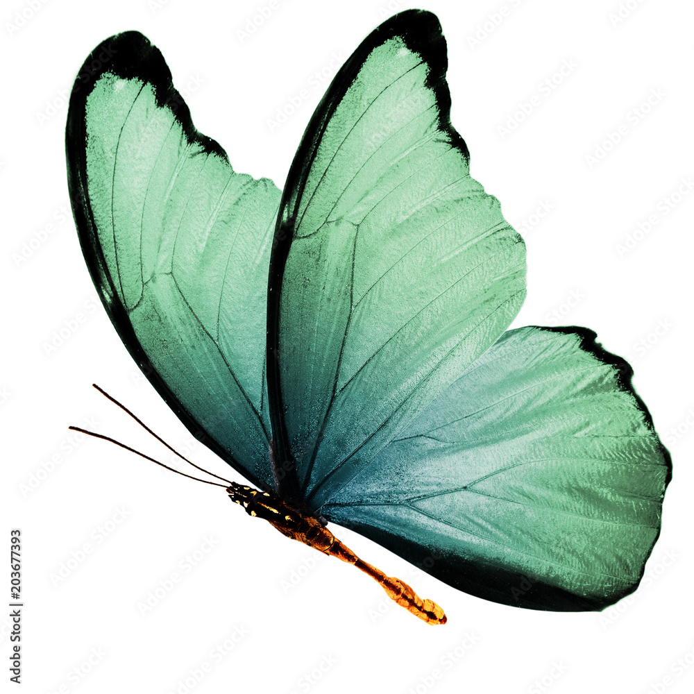 Fotografie, Obraz  beautiful wings of a blue butterfly isolated on a white background
