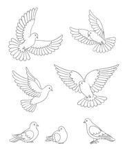 Set Of White Doves In Contours...