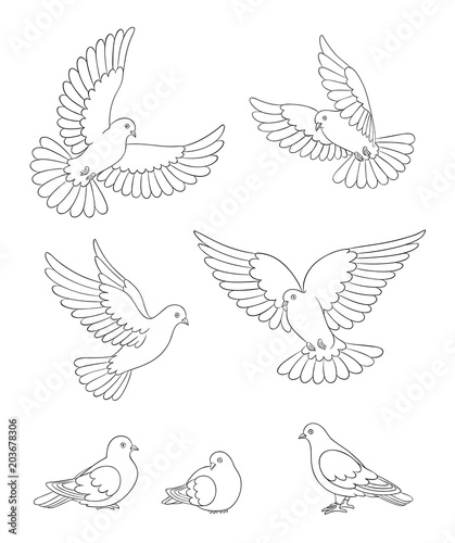 Set of white doves in contours - vector illustration Wall mural