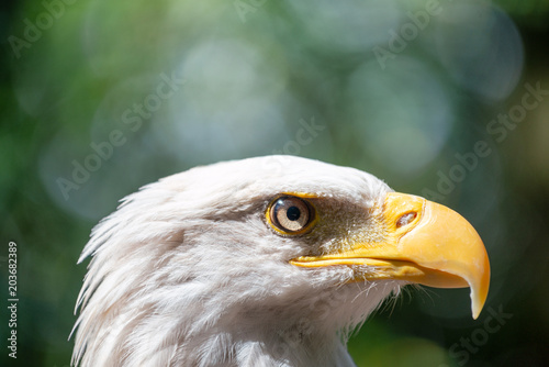 Photo  Side view of Eagle