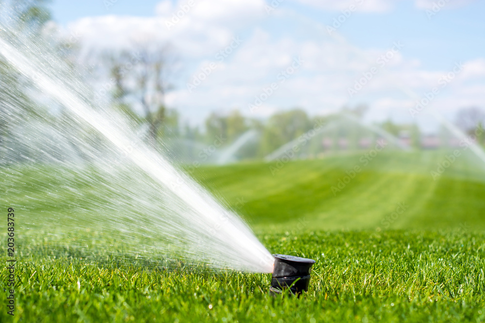 Fototapety, obrazy: irrigation system sprinkles water fountain for long distance irrigated golf course
