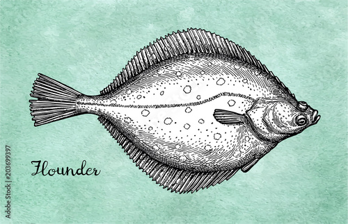 Fotografía Flatfish. Ink sketch of flounder.