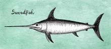 Ink Sketch Of Swordfish.