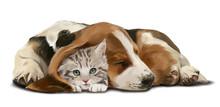 Grey Kitten And A Sleeping Dachshund
