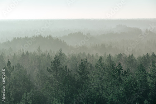 Foto op Canvas Donkergrijs panoramic view of misty forest