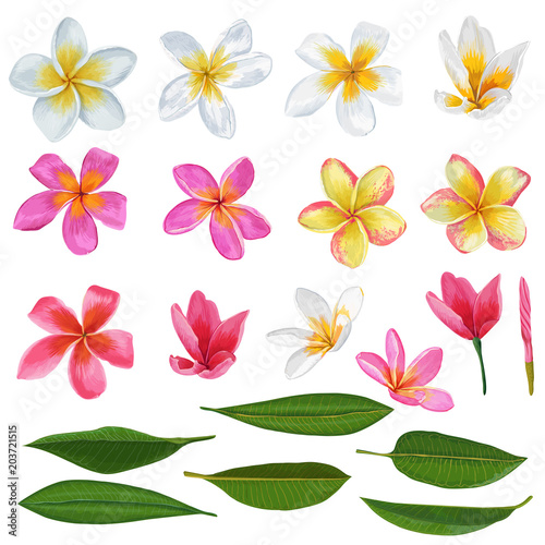 Leinwand Poster Plumeria Flowers and Leaves Set