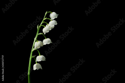 Foto op Plexiglas Lelietje van dalen Lily of the valley, is a beautiful flower in the garden.