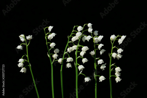 Poster Lelietje van dalen Lily of the valley, is a beautiful flower in the garden.