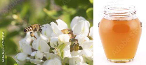 Poster Bee пчела собирает мёд на дереве акация рядом банка с мёдом