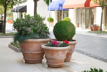 Huge Decorative Pots With Plants On The Street In Tivat, Montenegro.