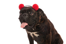 Cute Boxer With Red Earmuffs P...