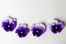 Violet Flowers Arrangement Top View