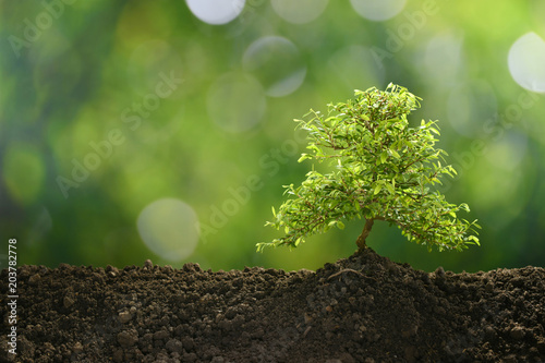 Foto auf AluDibond Bonsai Small tree in the morning light growing out from soil