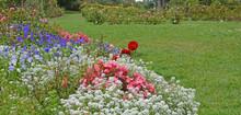 Beautiful Flower Garden In Golden Gate Park San Francisco