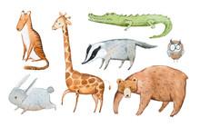 Watercolor Illustration Of Animals Hand Drawn Aquarelle