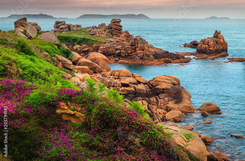 Spoed Foto op Canvas Kust Atlantic ocean coastline with colorful flowers and cliffs, Ploumanach, France