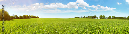Photo Stands Blue sky Wiese Panorama