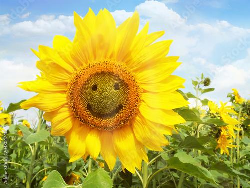 Sonnenblume - Smile