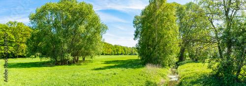 In de dag Lime groen Waldlichtung in Deutschland - Panorama- Frühjahr