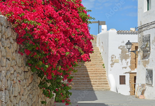 Beautiful pink bougainvillea in Ibiza