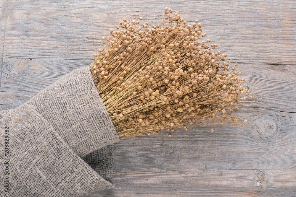 Fototapety, obrazy: plant dry flax on wooden boards, a bundle of flax wrapped in cloth burlap, a lot of dry plants