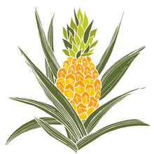 Hand Drawn Pineapple Plant. Ve...