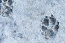 Animal Track Frozen In Stone