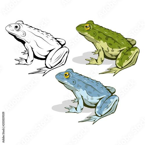 Vector frog logo. Frog Sketch. Vector artwork. Tableau sur Toile