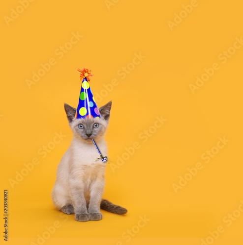 Fotografie, Obraz  Cut Siamese Party Cat Wearing Birthday Hat