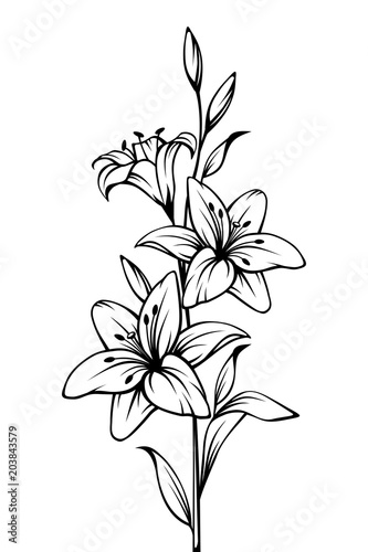 Vector black and white contour drawing of lily flowers. Fototapet