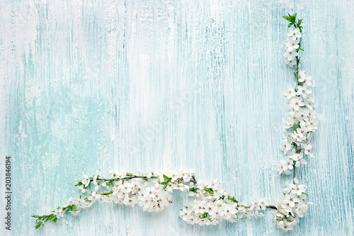 Spring background. Blooming branch of plum trees on blue background. Copy space, top view. Holiday background.