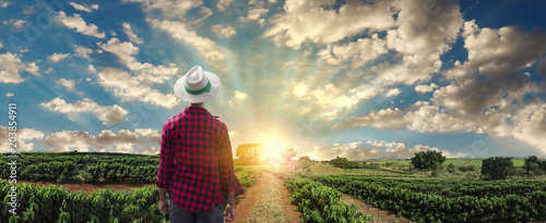 Cuadros en Lienzo Farmer or working with hat on coffee field at sunset field