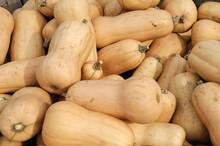 Butternut Squash Pile In Harve...
