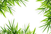 Bamboo Leaves,Isolated On A White Background,