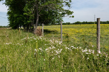 Barbed Wire Fence With Wildflowers