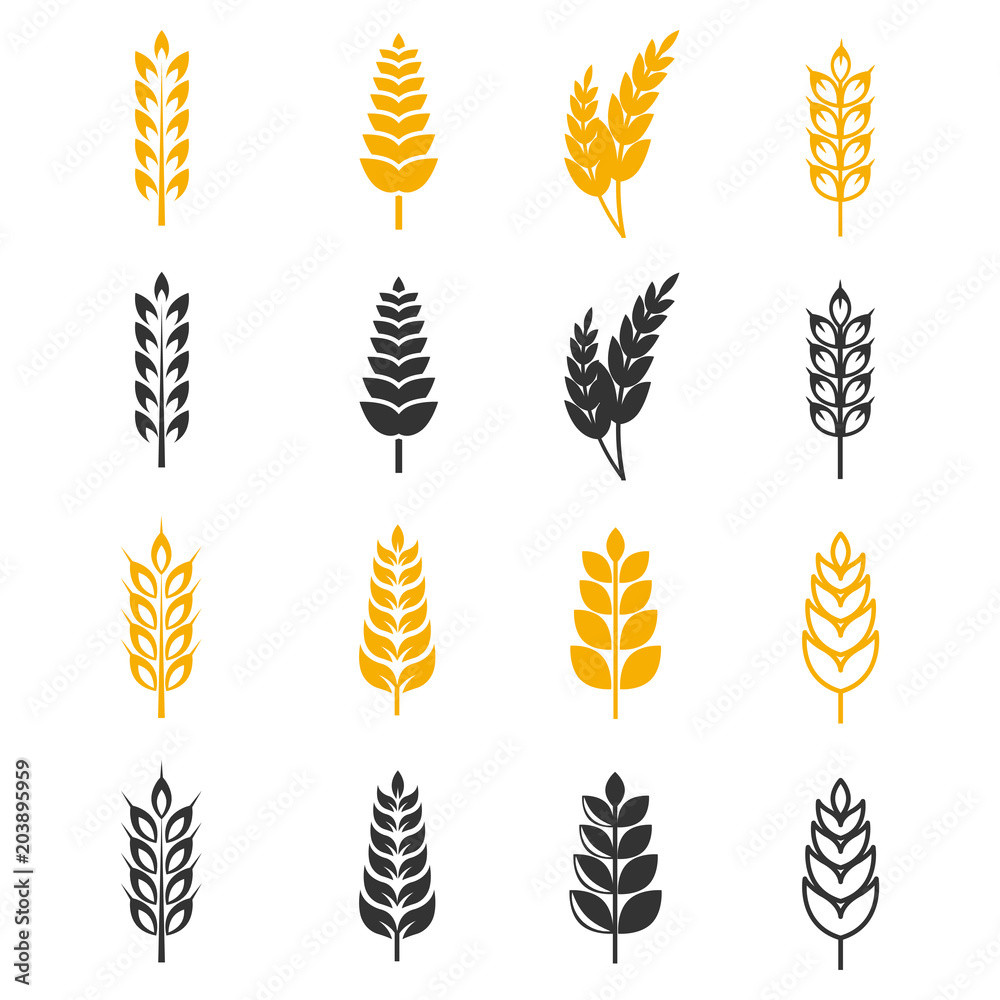Fototapety, obrazy: Black and yellow wheat ears silhouettes vector icons