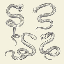 Hand Drawing Snake Set. Wildlife Snakes Tattoo Vector Design Isolated